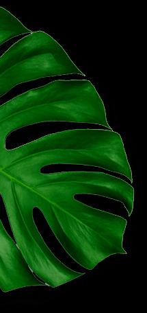 hojas album left top