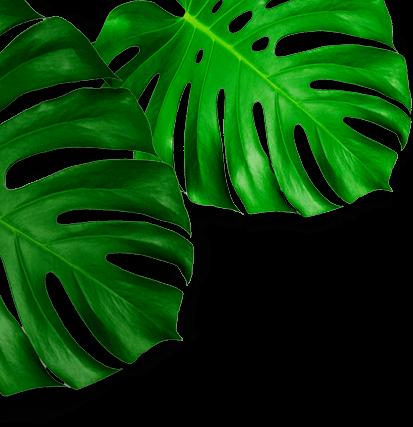 hojas caracteristica left