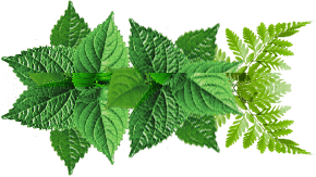 hojas scroll