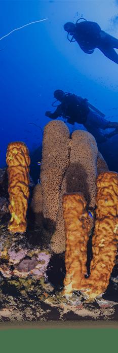 explora aventura arqueologica PNN CORALES DE PROFUNDIDAD